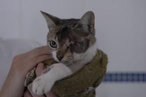 Gato foi atingido por arma de compressão (Foto: Agência RBS)
