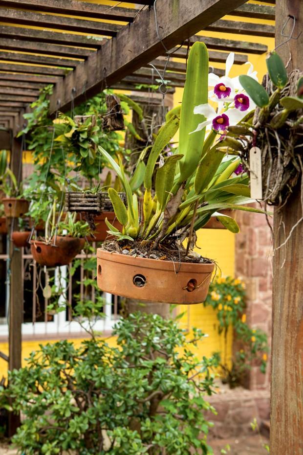 orquideas (Foto: Casa e Jardim)