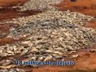 Mortandade de peixe gera prejuízo de R$ 18 milhões no Castanhão, no CE