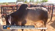 Agrobrasília deve movimentar R$ 800 milhões até sábado