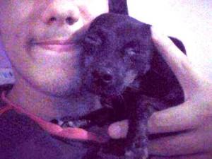 Cachorrinha Rihanna morreu amarrada à linha do trem (Foto: Vânia Vellano/Arquivo pessoal)
