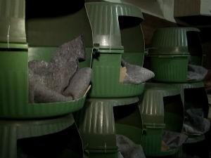 casinhas de cachorro (Foto: Reprodução / TV Bahia)