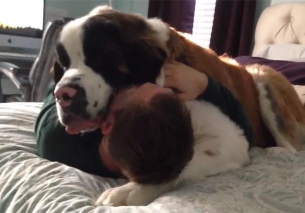 Quando dono faz qualquer tentativa para se erguer, Sully coloca suas pesadas patas sobre ele e não deixa fazer nenhum movimento (Foto: Reprodução/YouTube/Rumble Viral)