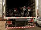 Quadrilha invade galpão do Detran no Ceará e leva 10 motos em caminhão
