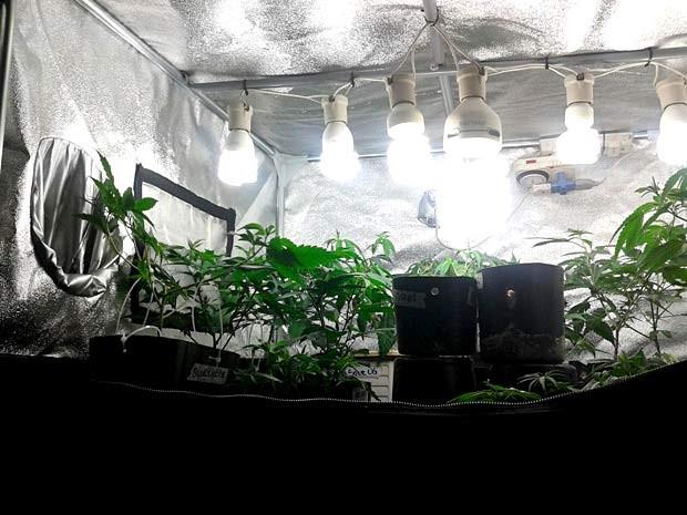 Estuda com plantação de maconha, encontrada em apartamento no Guará, no DF (Foto: Polícia Civil/Divulgação)