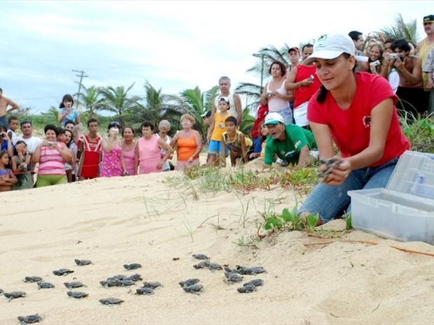 Soltura de tartarugas marinhas em Anchieta (Foto: Renan Alves/Prefeitura de Anchieta)