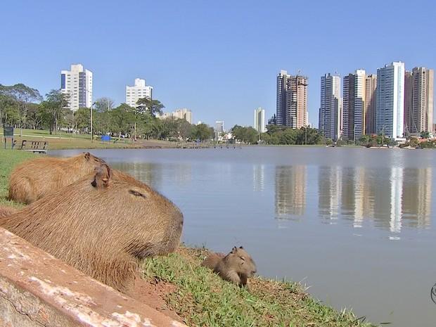 Parque das Nações Indígenas em Campo Grande MS (Foto: Reprodução/TV Morena)