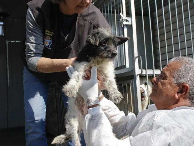 Animais foram resgatados de residência na manhã desta terça (12) (Foto: Petra Mafalda/PMF)