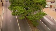 'Cegueira botânica' impede a observação das milhares de árvores que existem na capital