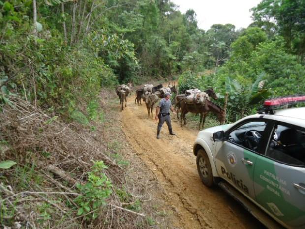 Criminosos extraíam o produto dentro do parque Intervales. (Foto: Divulgação / Polícia Ambiental)