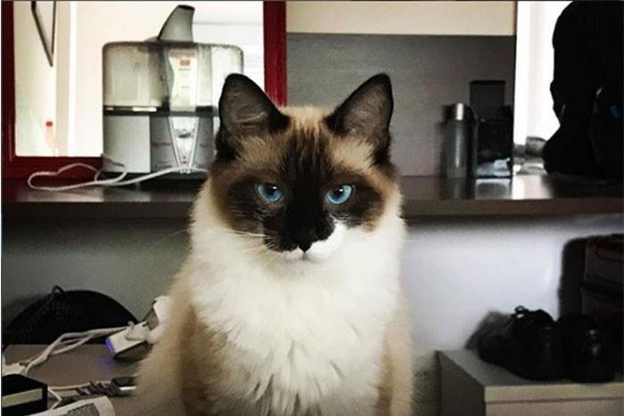 Galileu, o gato (Foto: Reprodução/ Instagram/ galileuogatoadotado )