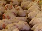 Criadores de frango e frigoríficos do PR comemoram crescimento do setor