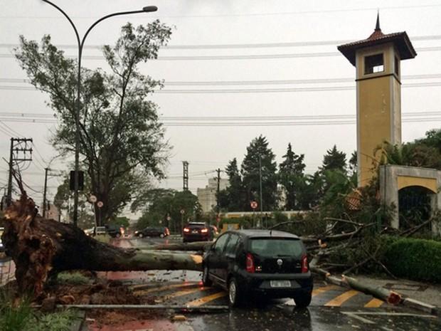 Queda de árvore na Rua Dr. Cândido Mota Filho, na altura do Center Shop Colina, na região do Butantã, em São Paulo (Foto: Marco Aurélio Chineacco/VC no G1)