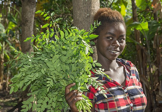 Após descer de um tronco de moringa, uma jovem da etnia Ari mostra o resultado de sua colheita: as folhas serão usadas na próxima refeição (Foto: © Haroldo Castro/ÉPOCA)