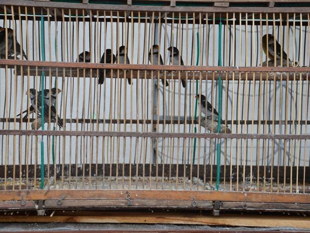"""Na manhã deste sábado (25), um homem foi preso e cerca de 40 aves foram apreendidas em uma casa no bairro de Cruz das Armas, em João Pessoa. O sargento Gilvanício Pontes, do Batalhão Ambiental da Polícia Militar, explicou que """"encontramos um homem vendendo aves na rua e quando o detemos, ele nos mostrou essa casa e disse que o proprietário é que dava os pássaros para que eles fossem vendidos"""". (Foto: Walter Paparazzo/G1)"""