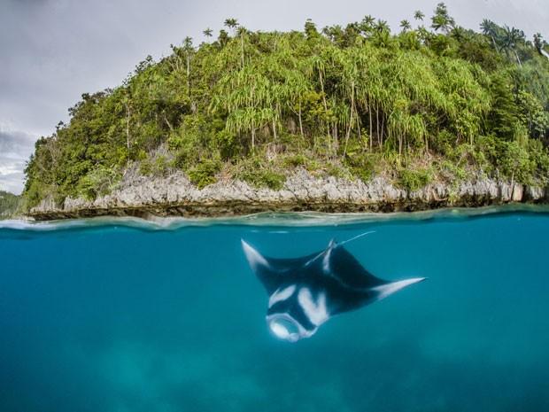 Arraia perto de ilha na Indonésia (Foto: Shawn Heinrichs/Conservation International/AFP)