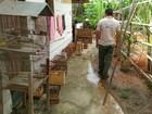Inea apreende 37 pássaros silvestres mantidos em cativeiro em Maricá, RJ