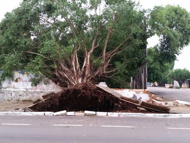Raiz de árvore destruiu concreto após queda de árvore (Foto: Reprodução/ WhatsApp)