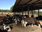 Goiás registra queda de mais de 6% na produção de leite no 1º semestre