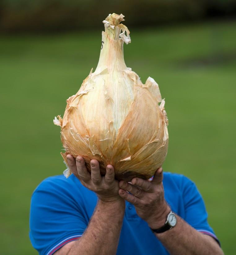 Com cebola de 7,01 quilos, britânico Joe Atherton conquistou título de competição de vegetais gigantes (Foto: Oli Scarff/AFP)