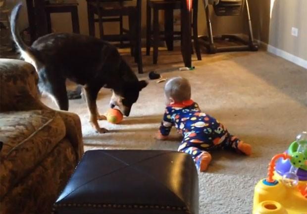Bebê se esforça para alcançar brinquedo, mas cão chega antes (Foto: Reprodução/YouTube/Joobs Thoma)