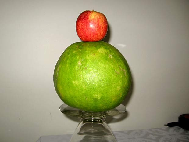 Laranja de quase 1 kg colhida por aposentado de Brasília sob uma maçã (Foto: Augusto Bello de Souza Filho/Acervo pessoal)