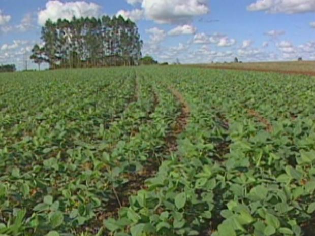 Plantio de nova safra de soja termina em MS (Foto: Reprodução/ TV Morena)