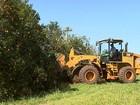 Crise faz produtores derrubarem milhares de pés de laranja em SP