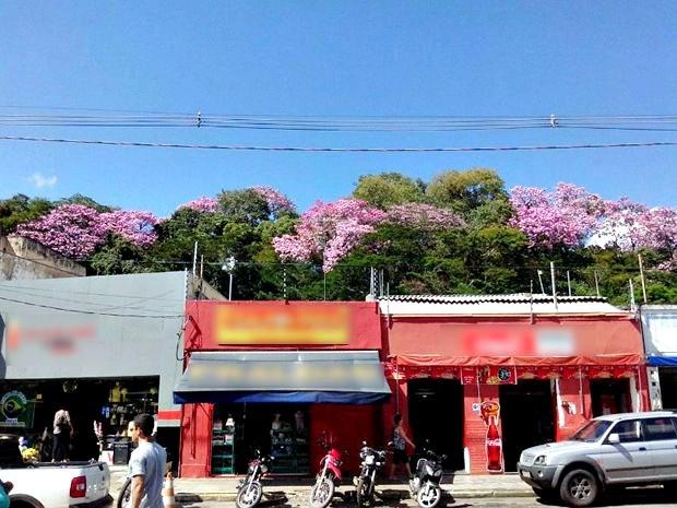 Ipês enfeitam área verde no Centro da capital (Foto: Fernando Henrique Silza/ Arquivo pessoal)