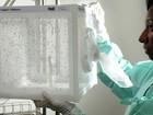 Fiocruz expandirá uso de Aedes com bactéria para combater dengue e zika