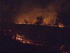 Incêndio atinge 10 hectares de mata em rodovia de Ribeirão Preto, SP