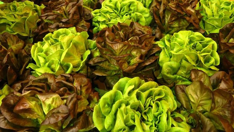 agricultura_alface_ (Foto: Shutterstock)