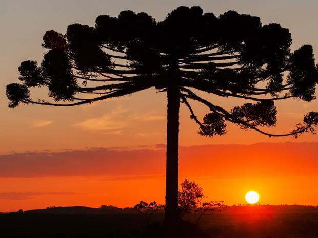 Exposição reúne fotografias do pôr do sol em Ponta Grossa (Foto: Celso Margraf)