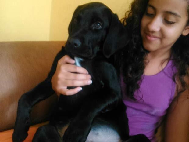 O cão Faísca, que foi furtado enquanto fazia vigília no local em que o dono morreu no DF (Foto: Tiago Gonçalves de Sousa/Arquivo Pessoal)