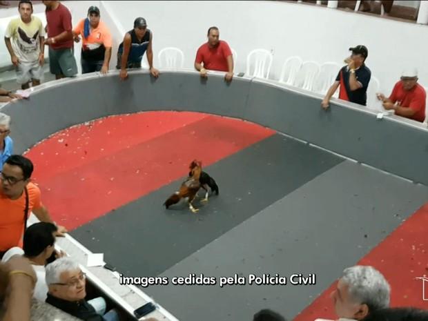 Rinha de galos é fechada pela Polícia Civil do Maranhão (Foto: Reprodução/TV Mirante)