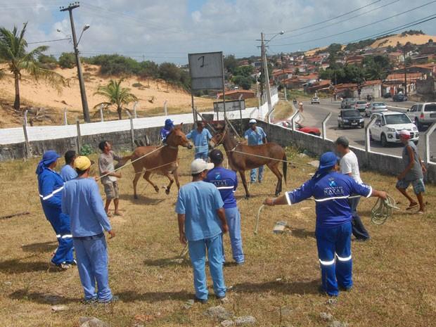 Animais foram capturados para evitar atração de aves que podem causar perigo aos voos (Foto: Divulgação/Prefeitura de Natal)