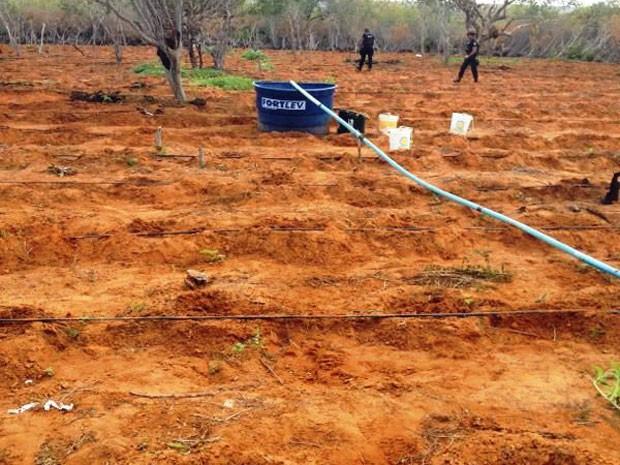 Sistema de irrigação foi instalado para manter plantação (Foto: Divulgação / PF)