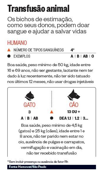 Transfusão animal (Foto: Fonte: Hemovet/São Paulo)