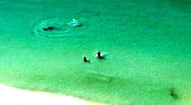 Banhistas saíram correndo após serem alertados sobre presença de tubarão em praia na Flórida (Foto: Reprodução/YouTube/Scott McCain)