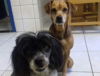 De raças diferentes, Lily e Jadinha são as melhores amigas (Foto: Arquivo pessoal)