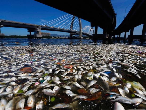 Flagrante de peixes mortos na Baía de Guanabara (Foto: Ricardo Moraes/Reuters)
