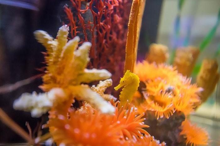(Foto: Clearwater Marine Aquarium)