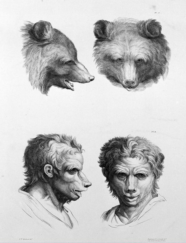 Urso (Foto: Reprodução/Charles Le Brun)