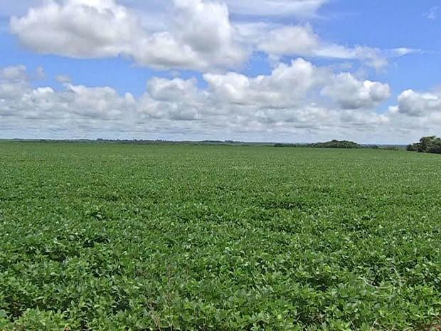 Produtores de soja diminuem as vendas antecipadas da produção (Foto: Reprodução/TV Morena)