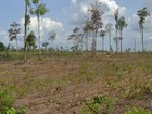 Amazônia perde área verde igual a 200 mil campos de futebol em dez meses