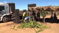 Ministério do Trabalho aponta crescimento da agropecuária na Bahia