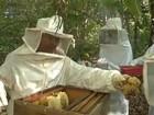 Sem flores, apicultor usa alimentação artificial para nutrir abelhas no TO
