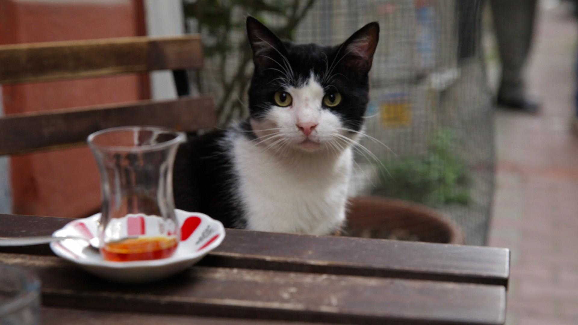 Gamsiz, uma das estrelas de Gatos (Foto: Divulgação)