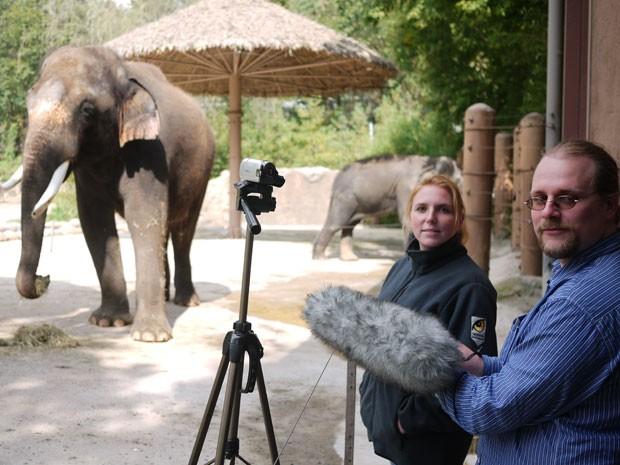 Foto mostra os pesquisadores coletando sons do elefante Koshik no zoológico Everland, na Coreia do Sul (Foto: Divulgação/Current Biology)