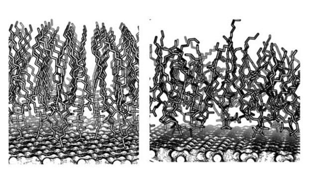 Diagrama mostra as diferenças de distribuição molecular nas escamas de costas e barriga  (Foto: Joe Baio)